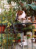 Murano cat #2