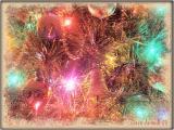 Christmas 2003.jpg