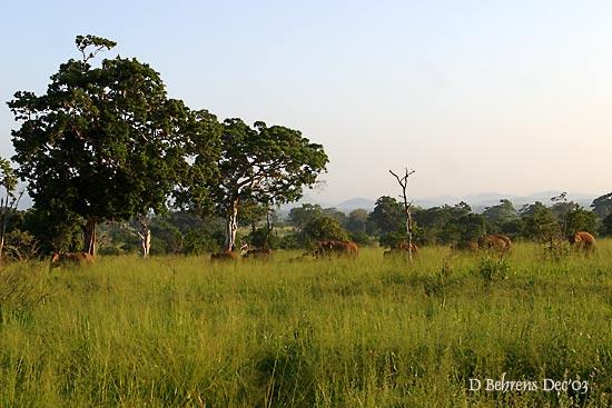 Udawalawe-Elephant herd.jpg