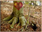 Beech Trunk ~ 2003