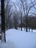 Snow 78.jpg