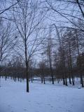 Snow-Arch323.jpg