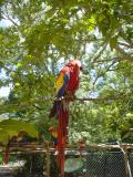 macaw at Copan