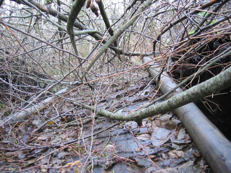 Swamp Trail - Damaged boardwalk