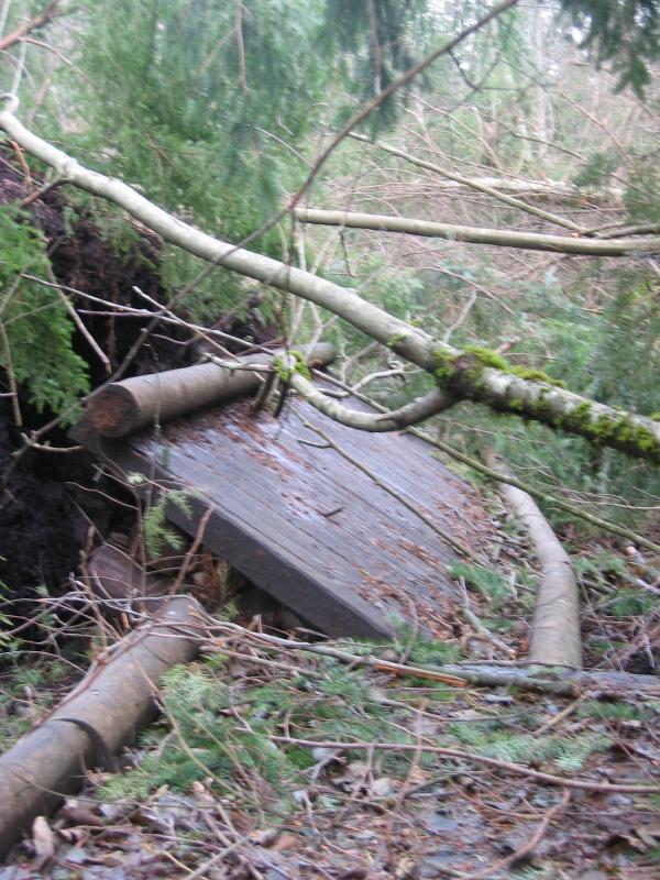 Swamp Trail - More damaged boardwalk