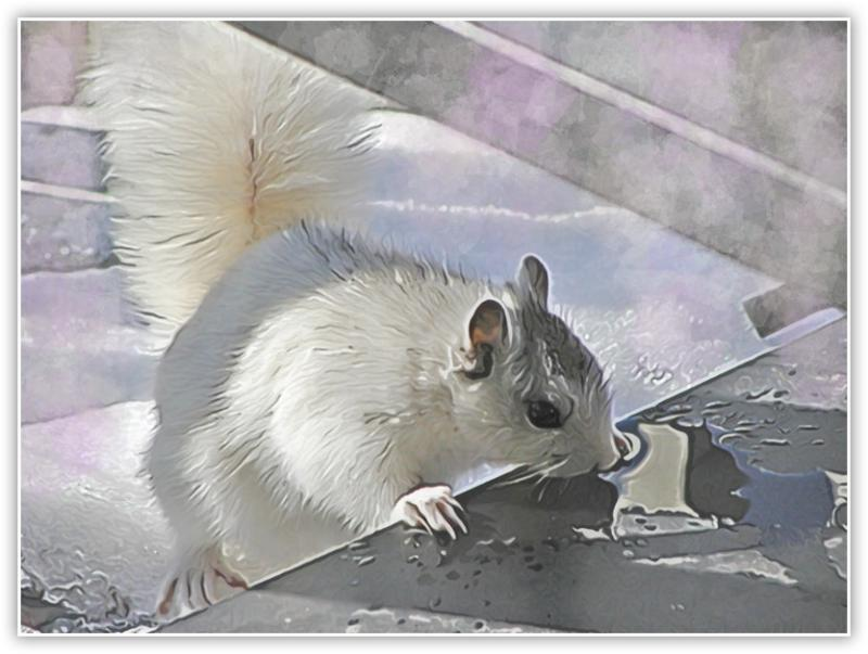 Mike Finns Easy-Draw action Thirsty White Squirrel