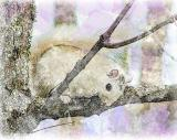InstaSketch White Squirrel