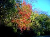 Beautiful Georgia Leaves!