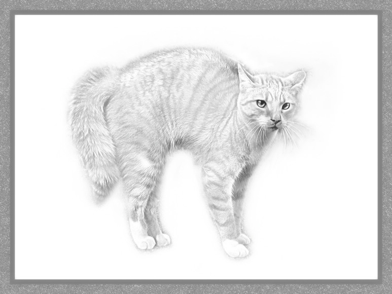 Angry Kitty (hi key)