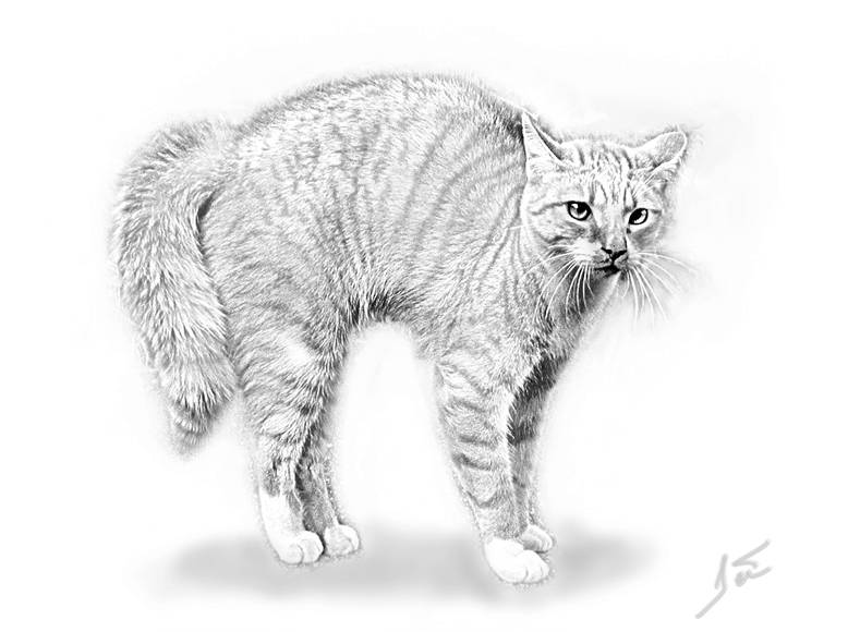 Higher contrast Cat