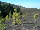 Parque Natural de Cumbre Vieja.  (2)