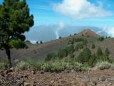 Parque Natural de Cumbre Vieja.  (5)