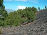 Parque Natural de Cumbre Vieja.  (9)