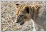 Baby cub - IMG_1722.jpg