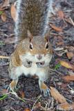 DSC00386-Mrs.-Squirrel-Begs.jpg