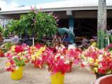fleurs au marché