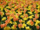 Niagara Flowers2