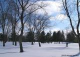 Flawless Snow