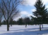 Winter on Golf Course