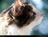 6836 cats.jpg