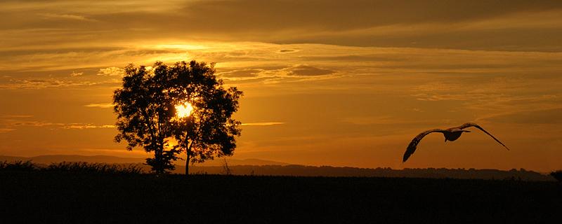 Sunset at Ash (2014)
