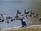Ducks and such.jpg(292)