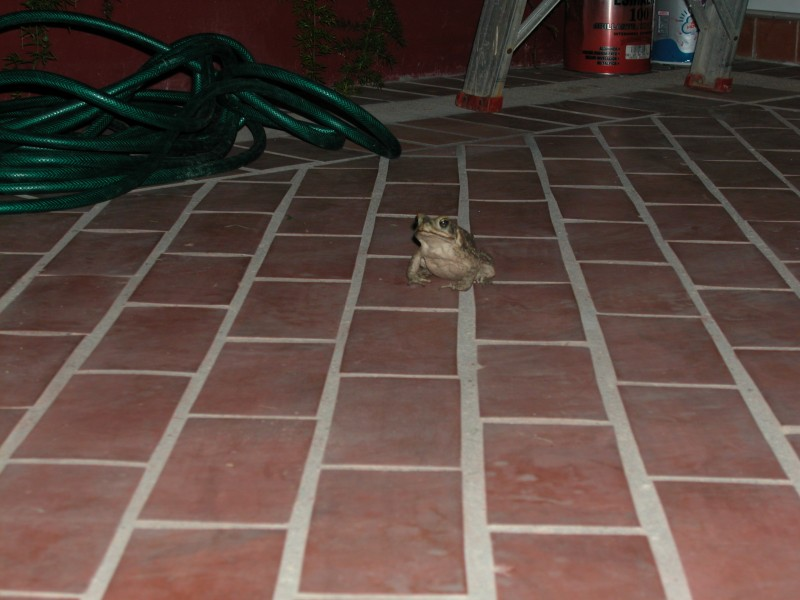 Frog coming for a visit