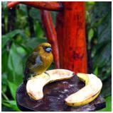 Bird at waterfall garden