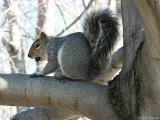 2005-02-05 Nuts!