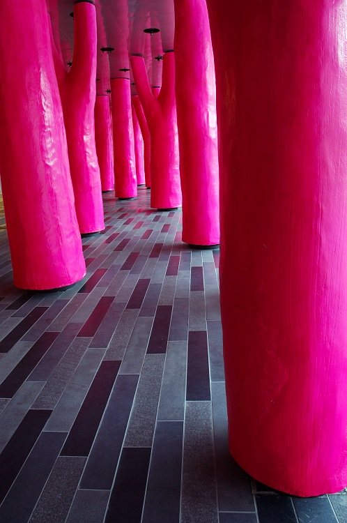 Day in the Pink Forest.jpg