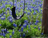 Bluebonnet Swing