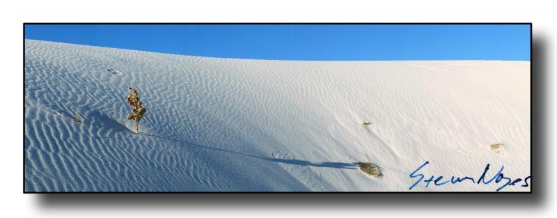 White Sands : Week 11