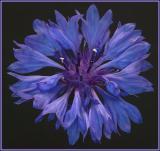 blue2a_d.jpg