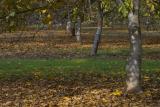 IMG00099 fall orchard.jpg