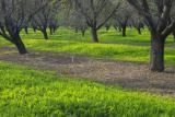 IMG00174 yellow orchard.jpg