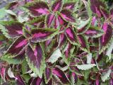 Foliage2.JPG