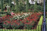 EPCOT - Rose Garden