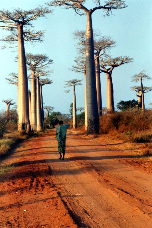 Avenue des Baobabs, published on educational CD