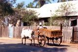 Zebu and cart