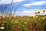 spring-flowers.jpg