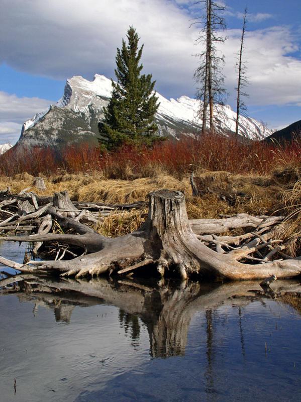 Deadwood under Rundle