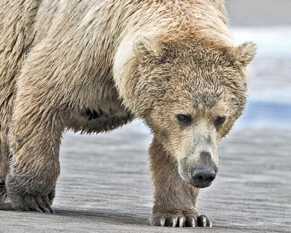 bear4email.jpg