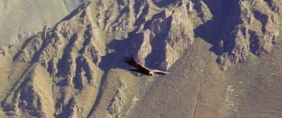 Condor Pass