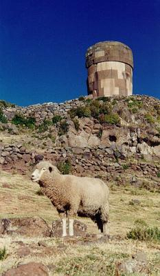 Sillustani - Sheep below a picturesque tomb