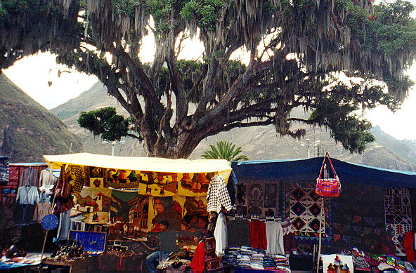 Pisac Market tents and weeping wllow tree, I think