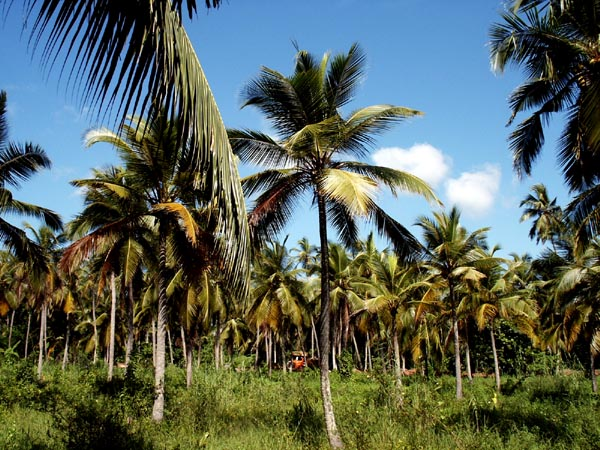 Coconut Palms at the Airport Garden Hotel
