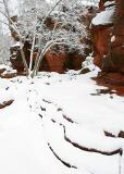 Winter Snow, Oak Creek Canyon