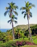 Two Palms - Taboga