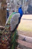 Pretty Bird #1, Magnolia Plantation Charleston.JPG