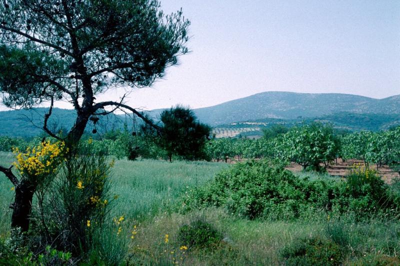 Selcuk countryside